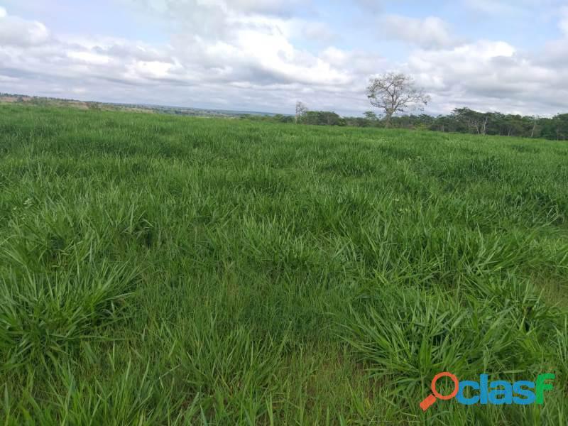 909 Alq. P/ Agricultura Estuda Prazo e 40% Permuta Em SP Com Entrada Mineiros GO 1