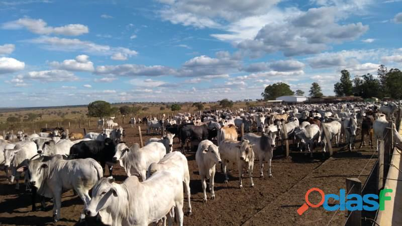 909 Alq. P/ Agricultura Estuda Prazo e 40% Permuta Em SP Com Entrada Mineiros GO 2
