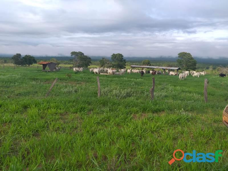 909 Alq. P/ Agricultura Estuda Prazo e 40% Permuta Em SP Com Entrada Mineiros GO 4
