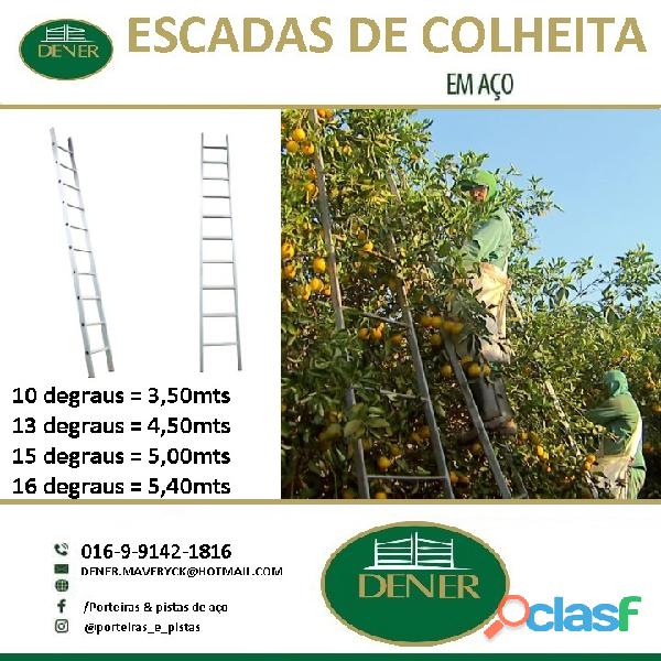 escadas de colheita e laranja