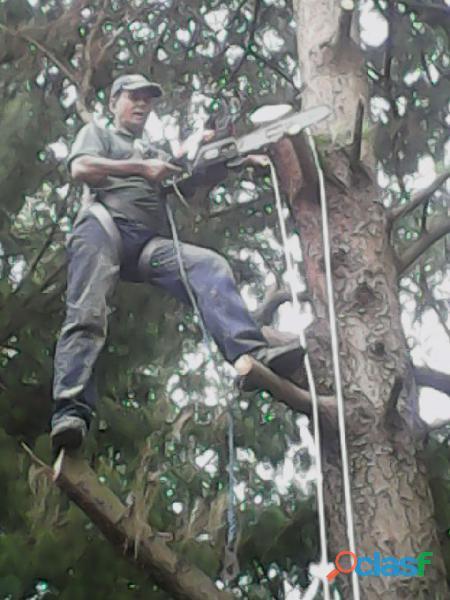 poda de árvores zap 11 98621 3420 2