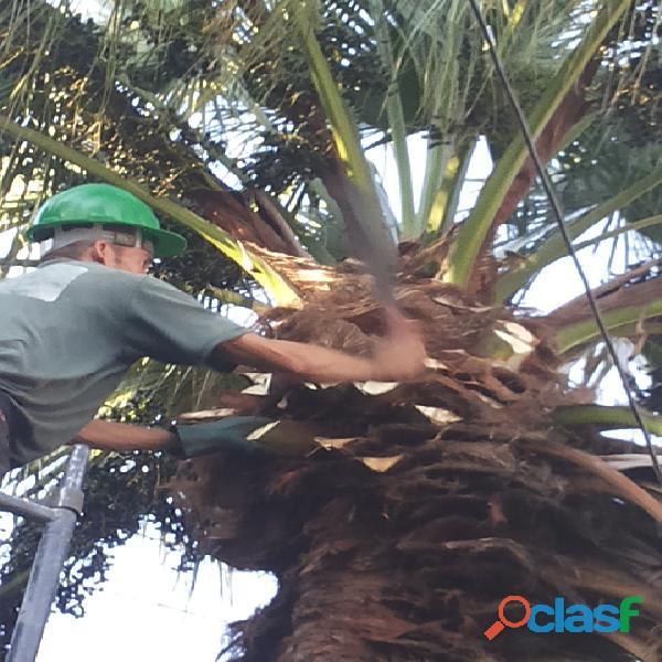 poda de árvores zap 11 98621 3420 3