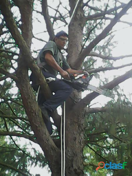 Corte de árvores em guarulhos zap 11 986213420