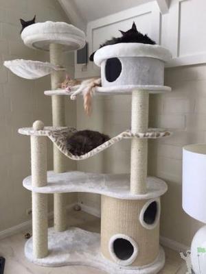 Arranhador de gatos