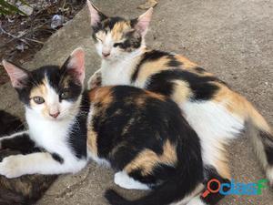 Doação de lindos gatinhos, tenha um amiguinho com você.