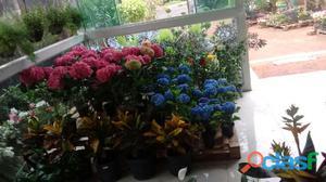 Paisagismo e jardinagem, plantas, mudas e vasos