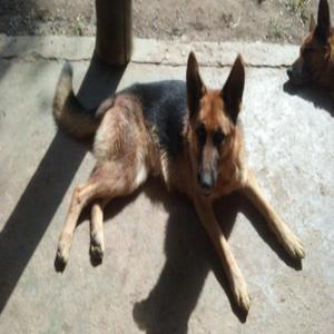 Adestramento / hospedagem de cães