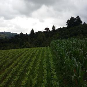 Area rural à venda