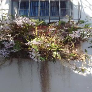 Gardencenter kasavaleverde jardinagem e paisagismo