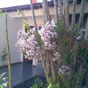 Karjimgarden pallets ? saulo turra | orquídeas | v verde |