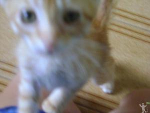 Gato filhote laranja