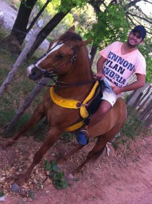 Cavalo quarto de milha puro registrado