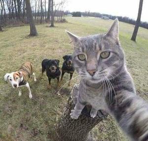 Seja um auxiliar veterinário em zoológico