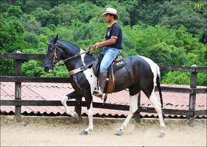 Vendas de cavalos