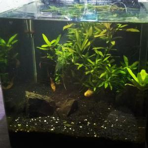Aquario com vidro curvo lapidado