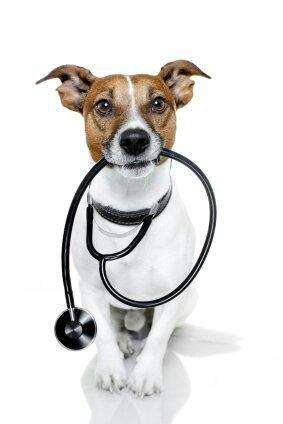 Atendimento veterinário em domicilio