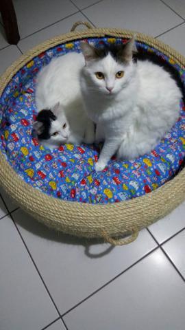 Cama arranhador para gatos