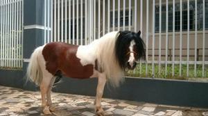 Cobertura de ponei