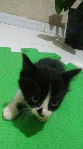 Doação de filhotes de gatos - guarulhos e zona leste