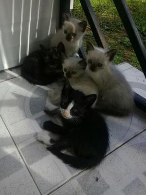 Doação de filhotes felinos