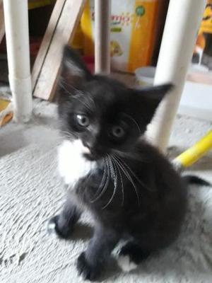 Doação gato filhote doação