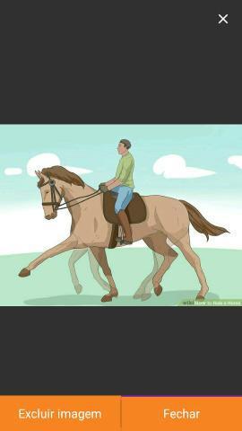 Domador de cavalos (bezerro)