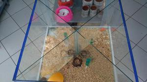 Expositor de roedores animais