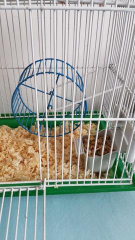 Gaiola 2 andares com hamster sirio