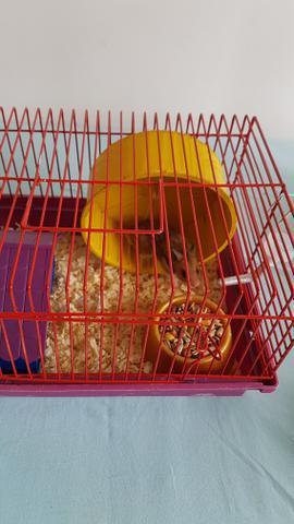 Gaiola nova com hamster sirio
