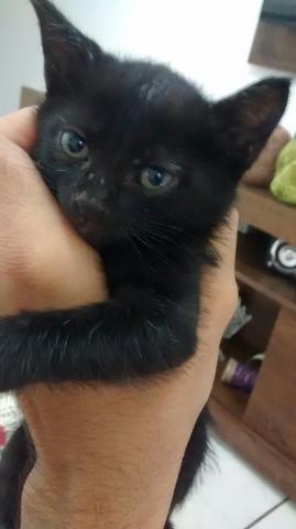 Gato filhote macho para adoção