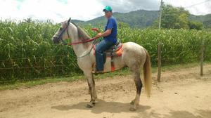 Vendo cavalo (caprichoso)