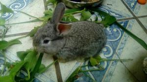 Vendo coelhos e porquinho da índia
