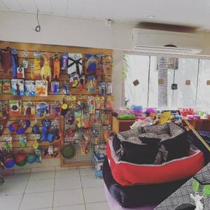 Hotel e creche para animais - cachorros, gatos, pássaros