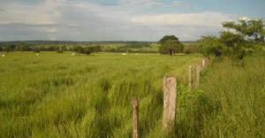 Fazenda a venda mato grosso do sul