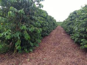 Fazenda de café boa esperança minas gerais 30,25 hectares
