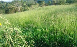 Terreno, meio hectare, próximo a antônio dos