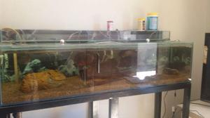 Aquario vidro 10mm