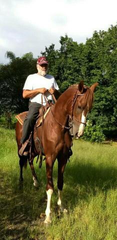 Cavalo manga larga(registrado)
