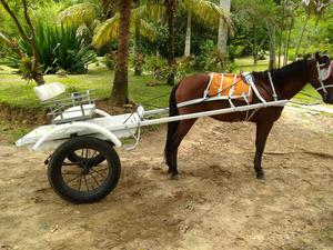 Cavalo com charrete