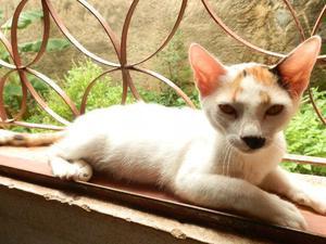 Doação de filhote de gatinha carinhosa em campos-rj