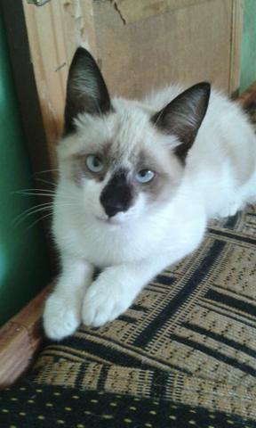 Doação de gato macho filhote
