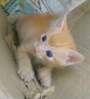Filhote de gato para doar