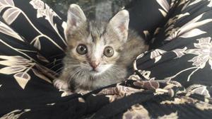 Gato filhote doação