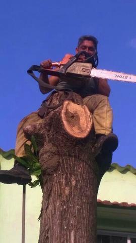 Corte, poda de árvores serviços de jardinagem