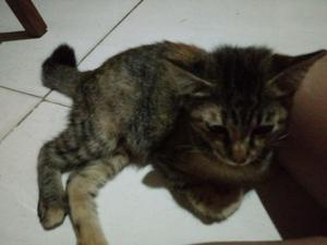 Adote a gatinha castrada Mel