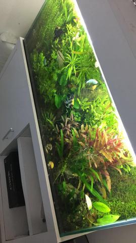 Aquário plantado 205 L