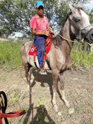 Cavalo arabi