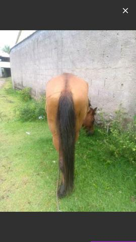 Cavalo de cela e charrete