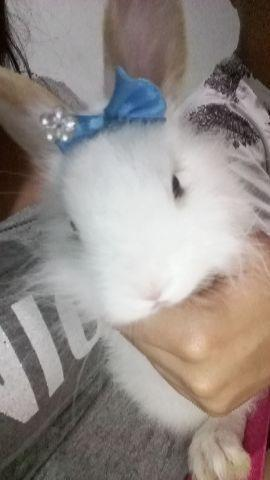Coelha 5 meses e gaiola