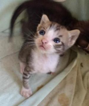 Doação de gatinhos 1 fêmea e 1 macho nasceu 08/02